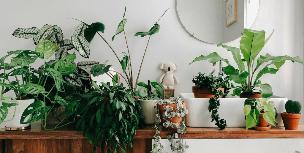 Quelles plantes d'intérieur avoir chez soi