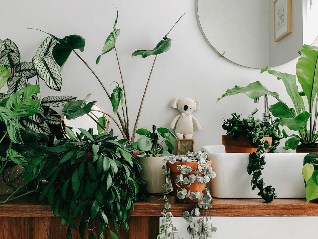 Quelles plantes d'intérieur avoir chez soi ?