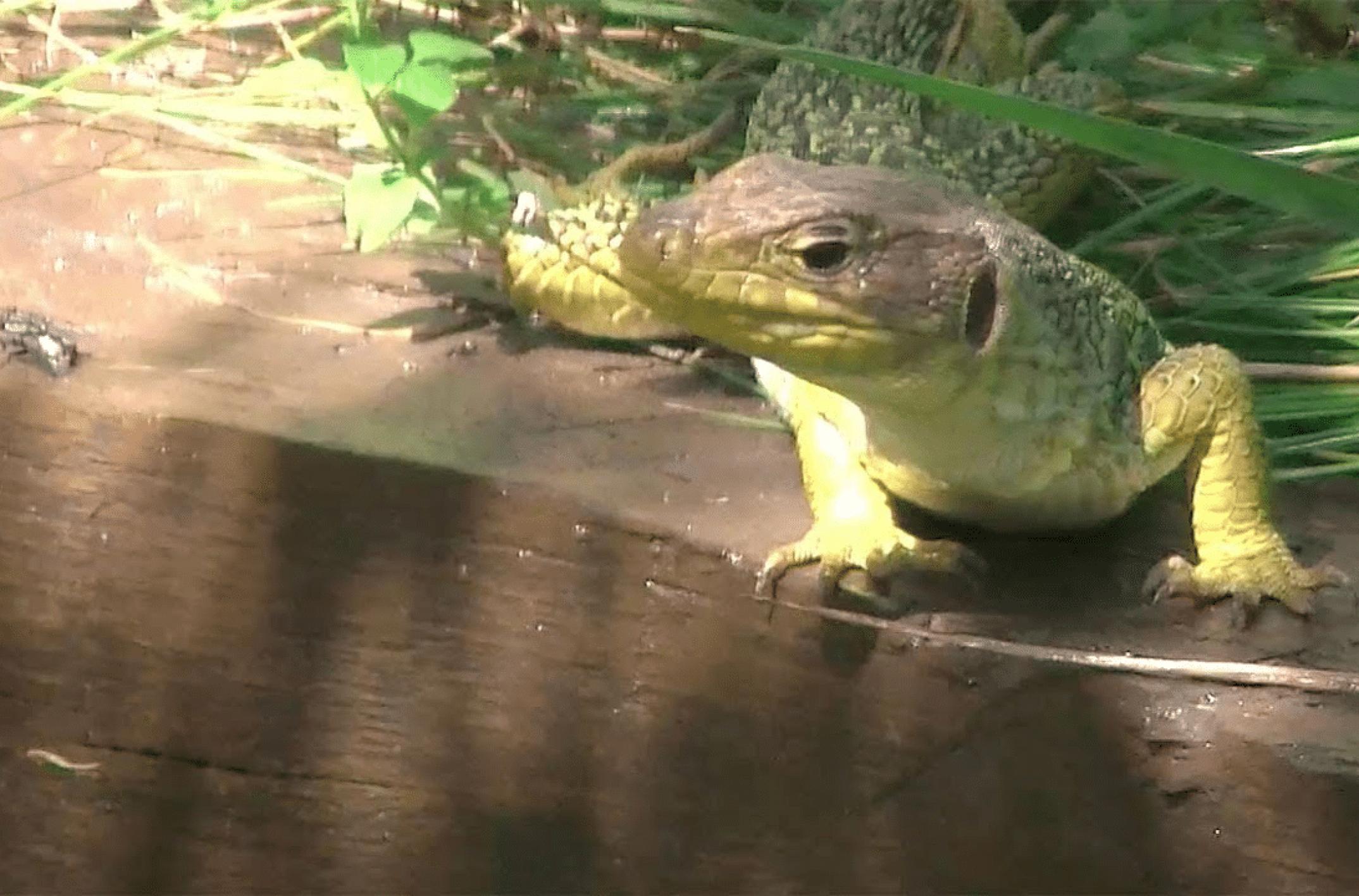 Comment faire fuir les reptiles de son jardin ?